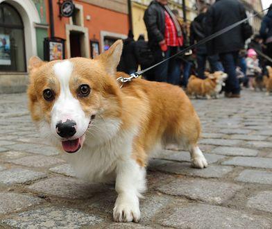 Spacery z psem należy ograniczyć do minimum