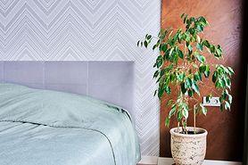 Rośliny, które oczyszczą powietrze w twoim domu