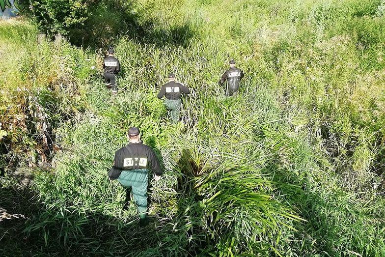 Policja przeczesała teren w Łódzkiem. Makabryczne odkrycie