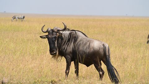 GNU Guix 1.0: menendżer pakietów i dystrybucja dla programisty