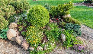 Jak stworzyć kwietnik w ogrodzie?