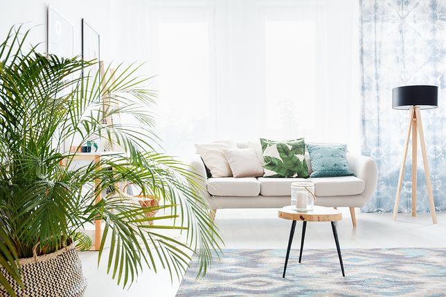Wnętrze w stylu urban jungle to idealny wybór dla miłośników roślin