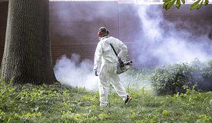 Plaga komarów. Jest na to sposób - odkomarzanie. Ile kosztuje i czy jest bezpieczne?