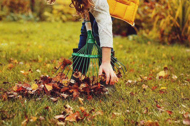 Jeden dzień pracy nad trawnikiem jesienią wystarczy, by odwdzięczył się wiosną