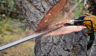 Od stycznia można legalnie wyciąć drzewo na własnej posesji