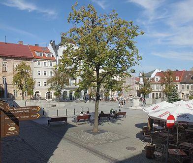 Bielsko-Biała. Miasto zadba o zieleń ogródków gastronomicznych