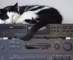 """Sąsiedzi dostawali """"kota"""" od głośnej muzyki. Wydało się, kto ją puszczał"""