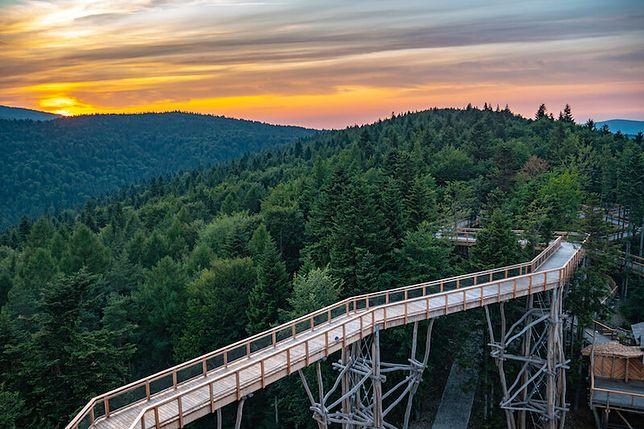 Wieża widokowa i ścieżka w koronach drzew w Krynicy-Zdroju już otwarta. Wyjątkowa atrakcja w Polsce