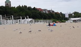 Morza szum, ptaków śpiew… i głosy wzburzonych turystów. Takie lato w Polsce