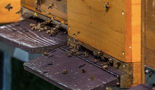 Kradli ule z pszczołami w środku. Grozi im więzienie