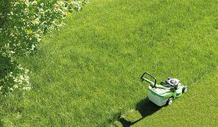 Dzięki regularnemu koszeniu trawnika będzie on nie tylko wciąż równy, ale też gęstszy.