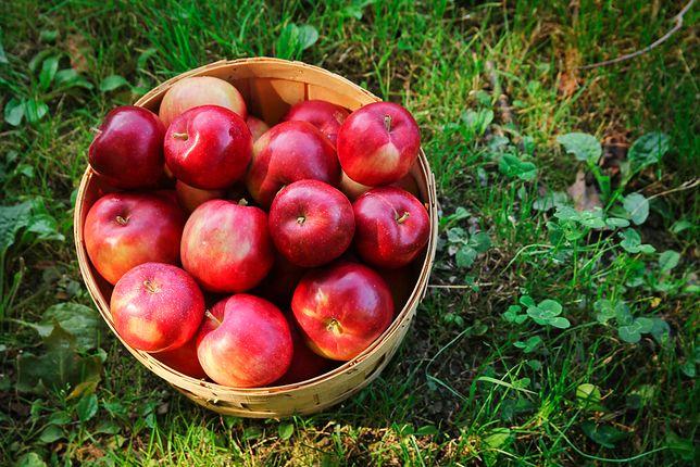 koszyk z jabłkami