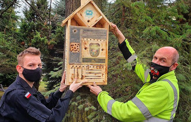 Dąbrowa Górnicza. Licealiści z III LO wykonali już około 30 domków dla owadów.