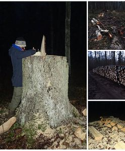"""Ekolodzy informują o wznowieniu wycinki w Puszczy Białowieskiej. """"To nonsens"""""""
