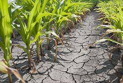 Brazylia: Kolejne duże niedobory wody. Kraj będzie walczył z suszą