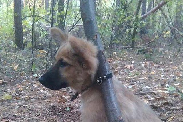Ten szczeniak został porzucony w lesie
