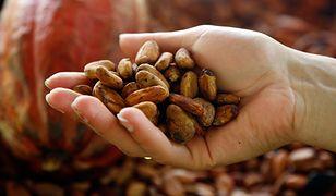 Masło kakaowe - właściwości i zastosowanie. Super kosmetyk