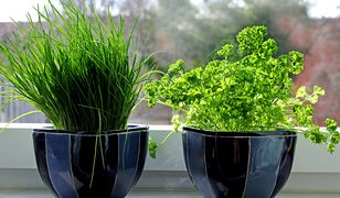 Ogródek na parapecie lub balkonie