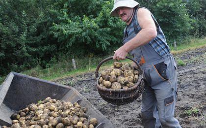 Ceny ziemniaków spadają