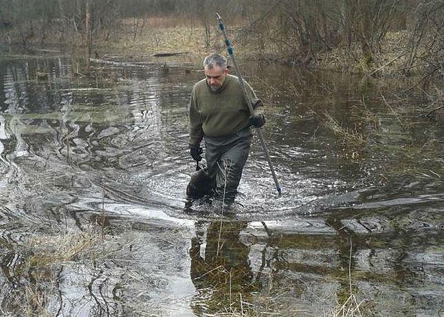 Problem z bobrami? Jedyny zawodowy łowca w Polsce zastrzelił ich ponad tysiąc