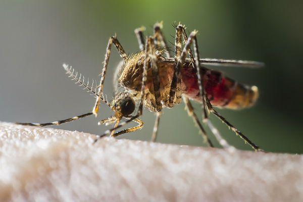 Do 500 euro kary dla tych, którzy nie walczą z komarami