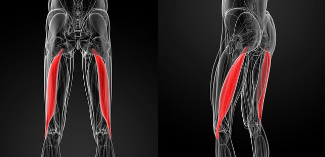 Mięsień dwugłowy uda - anatomia. Ćwiczenia na mięsień dwugłowy uda