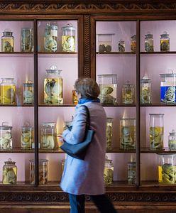 Zbiory martwych ciał. Nietypowe muzeum w Neapolu