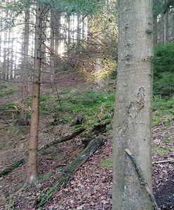 Dolny Śląsk. O krok od tragedii. Leśnicy pokazali, co znaleźli w lasach