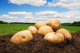 Niezwykłe zastosowania ziemniaka. Naturalny sposób na promienną skórę (WIDEO)