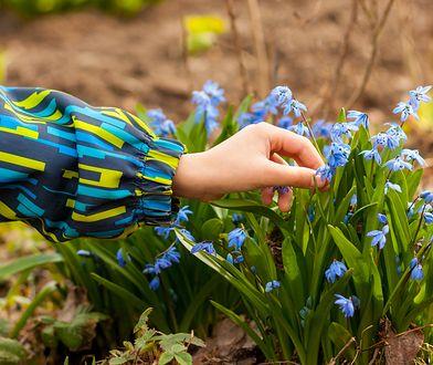 Niektóre prace ogrodowe warto wykonać właśnie w kwietniu