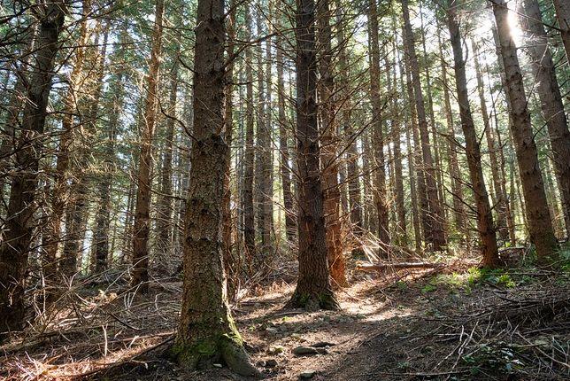 Łódzkie. 3-latek zaginął w lesie. Trwa akcja poszukiwawcza.
