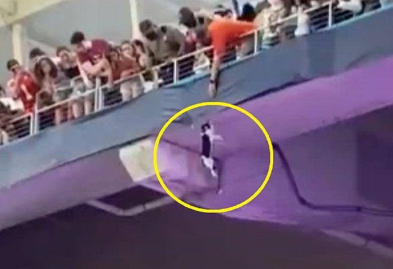 USA. Kot na stadionie w Miami. Dramatyczne nagranie hitem sieci