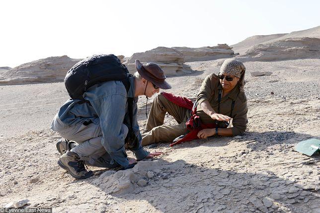 Badacze w trakcie pracy.
