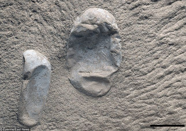 Odnalezione skamieliny.
