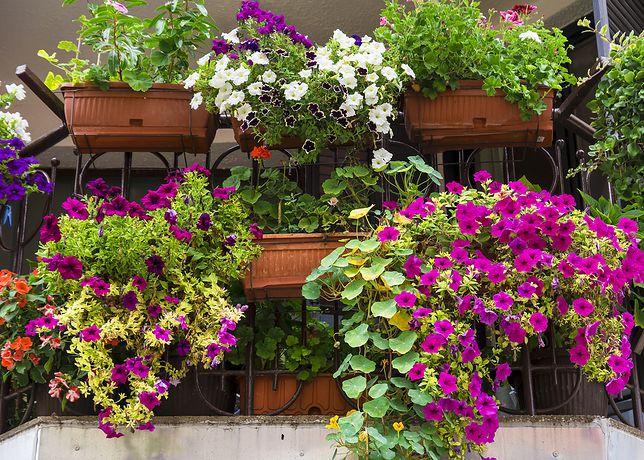 Odnowa balkonu po zimie