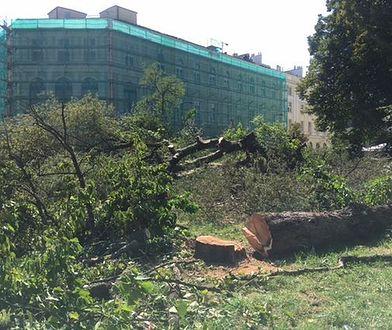 """Nielegalna wycinka drzew w Warszawie. """"Pomnik przyrody pocięty na kawałki!"""""""