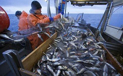 Tańsze ryby dzięki Rosji