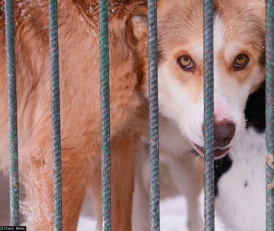 Organizacje na rzecz zwierząt biją na alarm. Szykują się zmiany w prawie