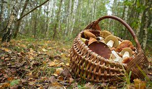 Rozpoznaj grzyby jadalne i trujące