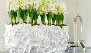 Hiacynt w doniczce - wiosna przez cały rok