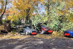 Wichura szaleje! Zniszczone samochody, przewrócone drzewa i uszkodzona katedra