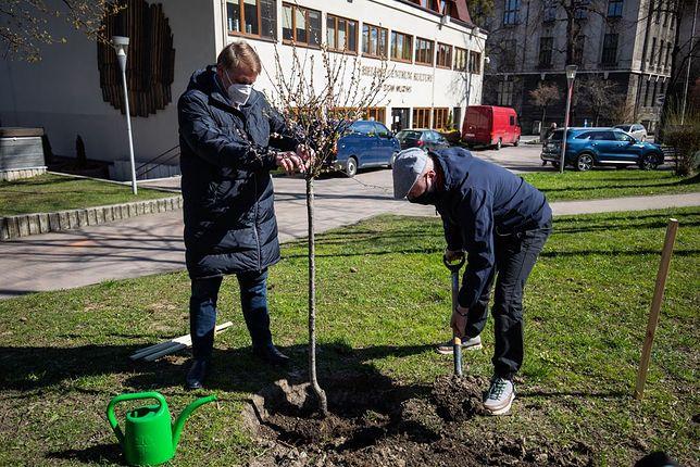 Śląskie. Migdałowca Bohdana sadził m.in. prezydent Bielska-Białej Jarosław Klimaszewski i członkowie Fundacji Ekologicznej Arka.