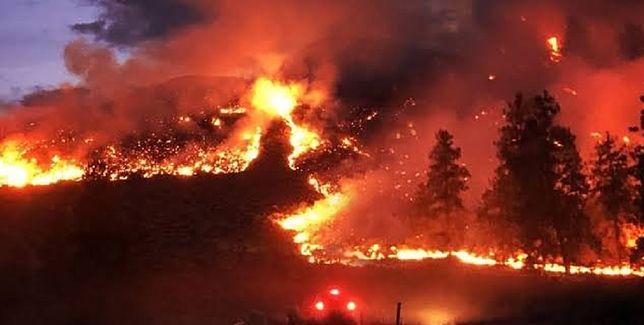 Pożar trawi lasy w Amazonii