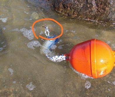 Kołobrzeg. SOR i szycie nogi po spacerze w wodzie. Kierownik kąpieliska wyjaśnia, skąd się wzięły metalowe pręty w Bałtyku