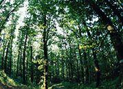 Sąd: Jezierscy bez 15 mln zł odszkodowania za lasy zabrane po wojnie
