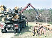 Brak nawet drogiego drewna