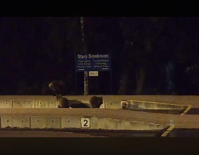 Niedźwiedzie były widziane na peronie w miejscowości Stary Smokowiec