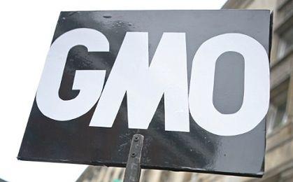 Polska będzie blokować rośliny GMO