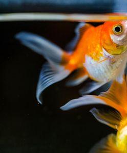 Jak czyścić akwarium w domu? Proste metody i przydatne triki