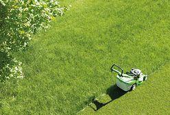 Perfekcyjny trawnik. Jakich błędów nie popełniać?